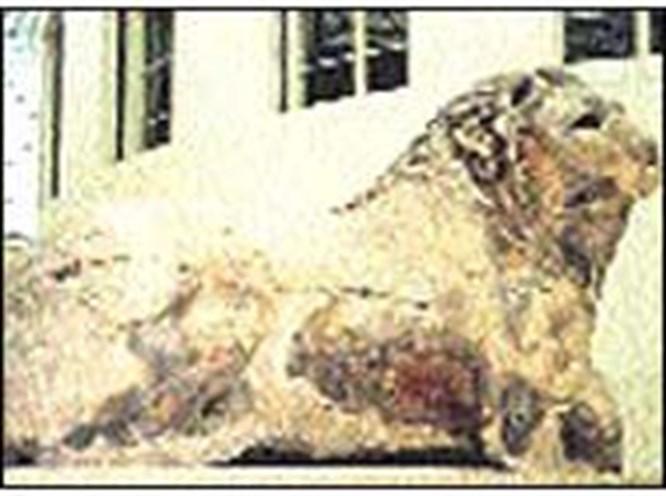 Knidos Aslanı yeniden doğacak